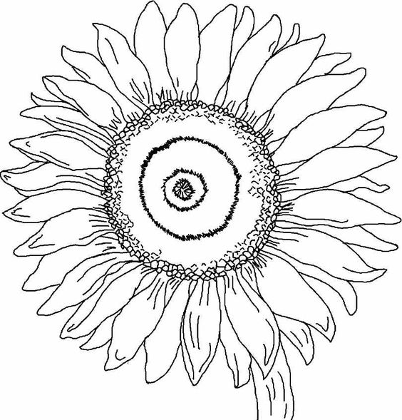Print Full Size Image Printable Free Sunflower Flowers Colouring Pages
