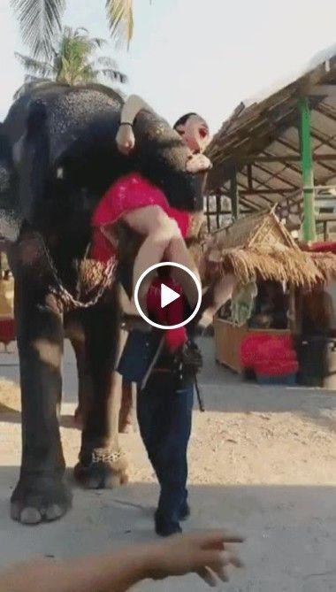 Mulher se desespera com truque de elefante