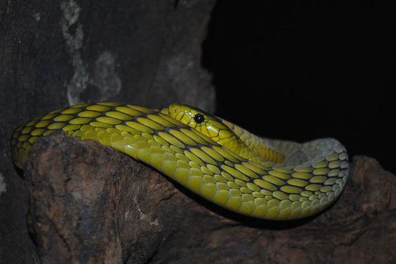 http://fluffylink.deviantart.com/art/Snake-502218783