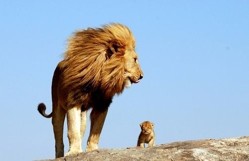 """""""One day, Simba, the sun will set on my time here, and will rise with you as the new king."""" - The Lion King"""