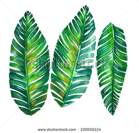 Tropical Leaves Banana Palm Illustration In Watercolor