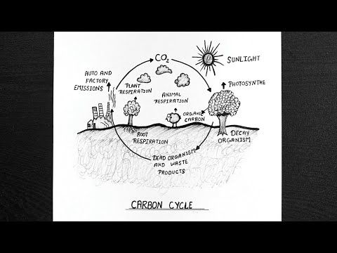 How To Draw Carbon Cycle Carbon Cycle Diagram Step By Step Youtube Carbon Cycle Cycle Drawing Easy Drawings