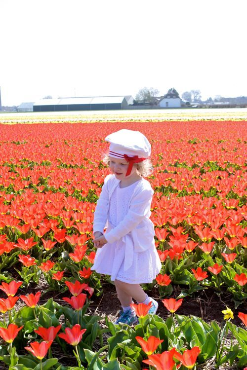 a visit to the tulip fields