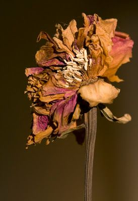 Petits papiers, papiers collés...: la fleur fanée