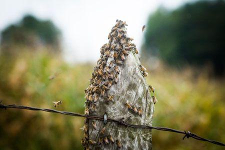A abelha faz o mel com o gosto do lugar - Paladar - Estadao.com.br