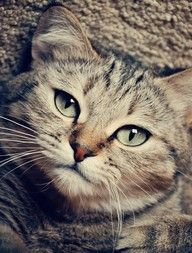 """""""Do not attempt to teach your cats tricks--they already know every trick there is."""" --Sidra Malik"""