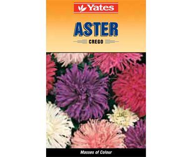 Yates Crego Aster