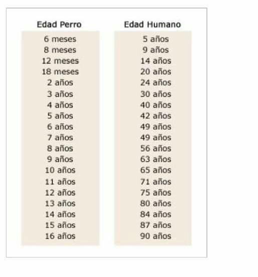 Edades del perro