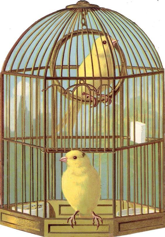 Oblaten Glanzbild scrap diecut chromo Vogelkäfig XL 22,8cm bird cage Sittich in Sammeln & Seltenes, Büro, Papier & Schreiben, Papier & Dokumente | eBay: