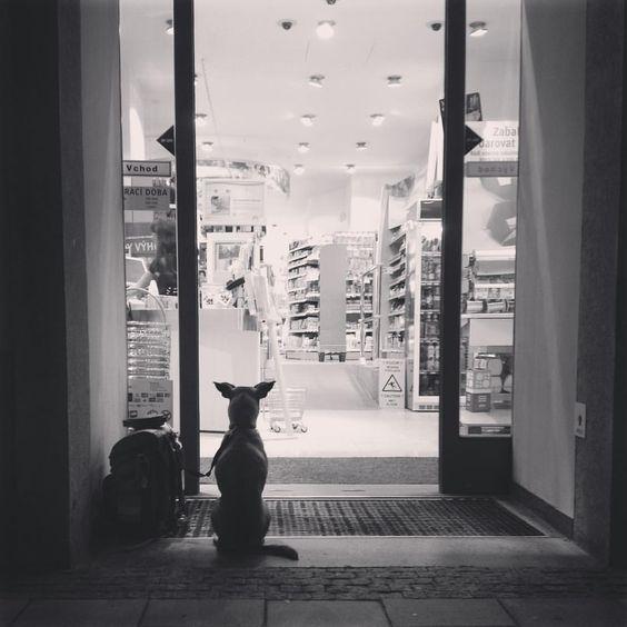 #waiting #dog #brno #czech #blackandwhite #photography