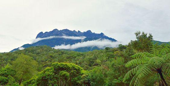 Mount Kinabalu Park/Crocker Range/Canopy Trail