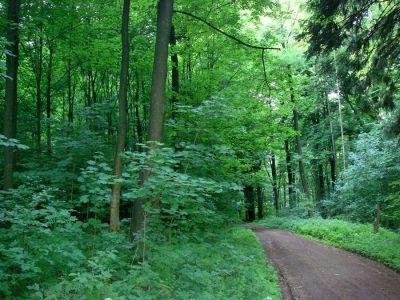 Nahrungskette im Wald