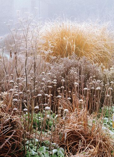 frost covered plants - from the book 'Winter Garden: Create a Garden that Shines Through the Forgotten Season' by Val Bourne