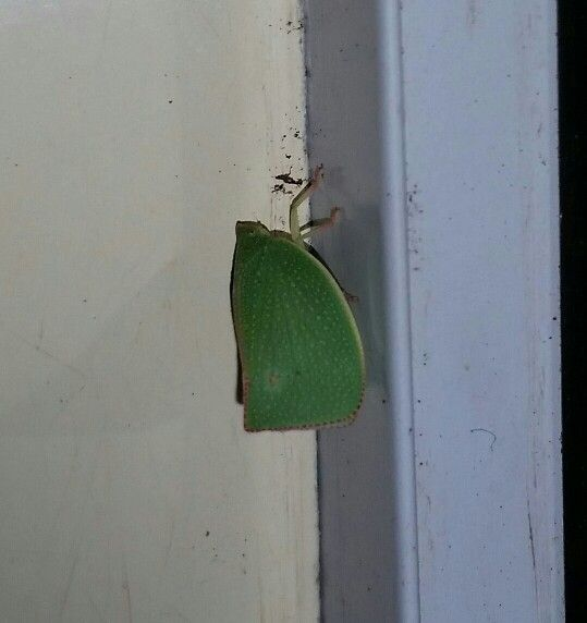 This little cutie was on the door handle