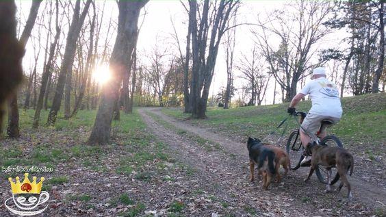 3 kutya sétáltatása hegyikerékpárral: Takács Gergely, DXN