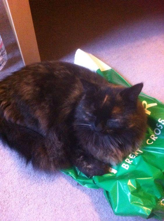 Poppy the mama cat
