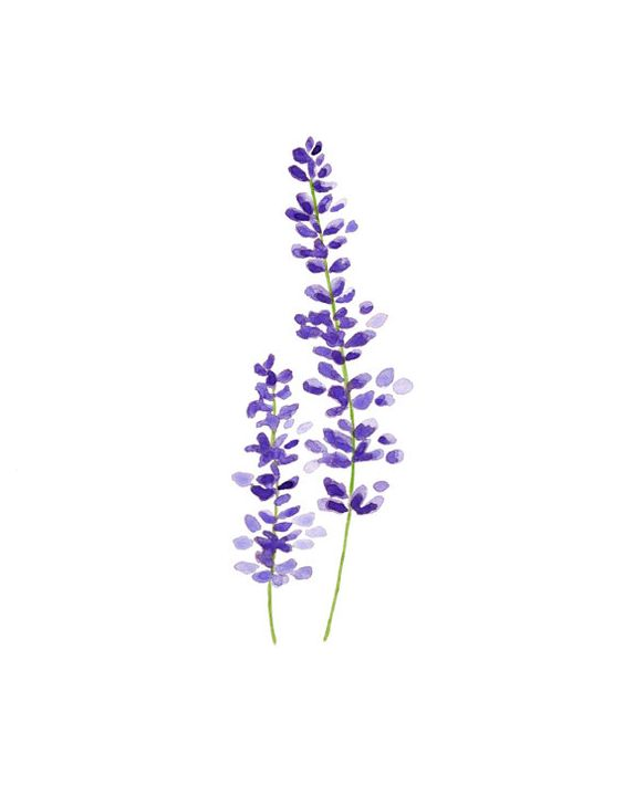 Imprimir acuarela lavanda botánica arte por TreeHollowDesigns