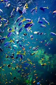 30 Fish Tanks Make A Decorative Splash Gt Santa Cruz Ideas Acquatic Living Creatures Marine Aquarium Aquarium Marine Fish