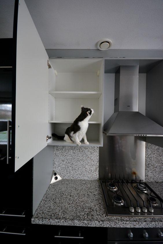 Luuk in de keukenkast.