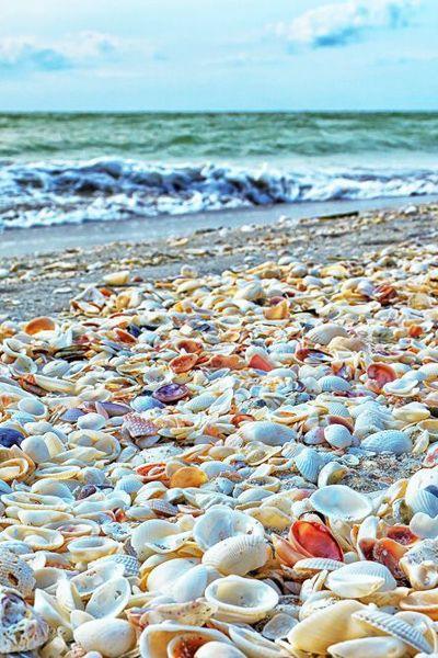 ハワイの浜辺と貝殻