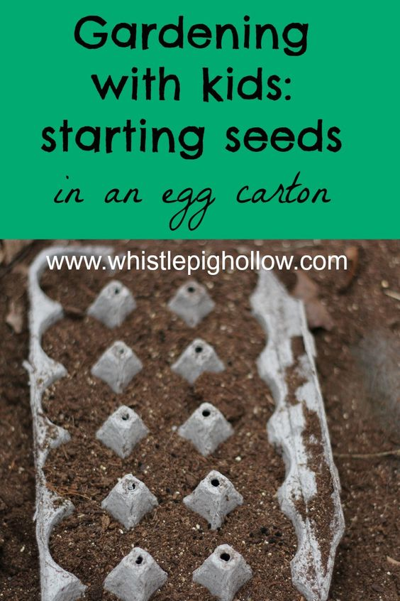 Gardening with Kids: Starting Seeds | Whistle Pig Hollow