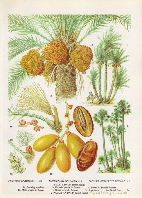 Kitchen Decor Vintage Botanical Print Wall Art by AgedPage on Etsy, $10.00