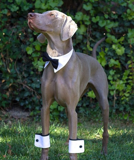 When you invite your doggy to your wedding! :-) ~ ~ ~ Dog cuffs for party wedding dog by usagiteam
