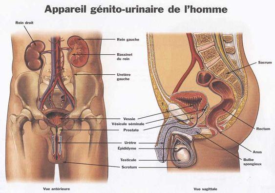 L'incontinence urinaire http://monblog75.blogspot.fr/2011/12/infos-sante-kine-osteo-lincontinence.html