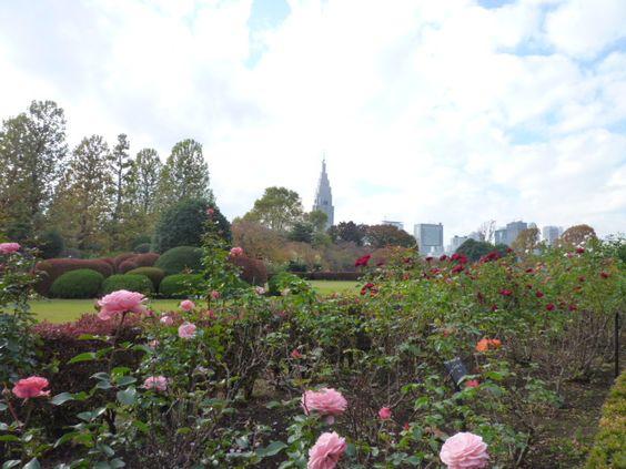 「新宿御苑」(Shinjuku Gyoen National Garden) Shinjuku, Tokyo, Japan