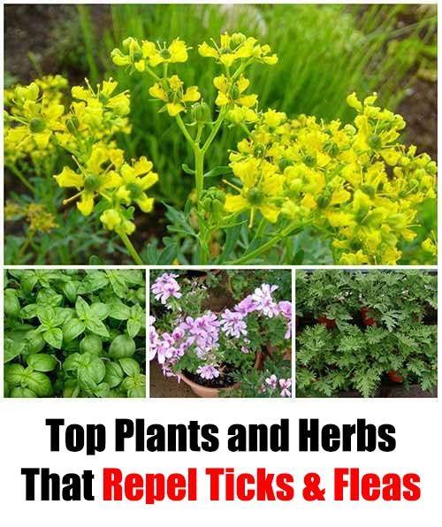 02261b8a65d4caf4a75192cc3edc9a2a - Plants That Repel Dogs From Gardens