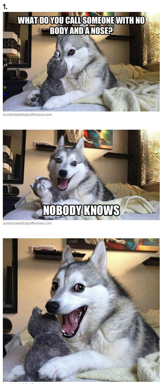 7+Pun+Dog+Puns+That+Will+Instantly+Brighten+Your+Day ...