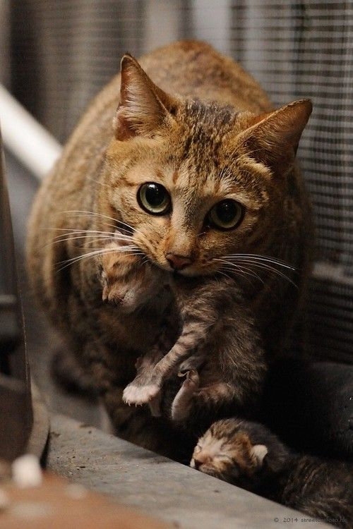 5 Reasons A Mother Cat Might Abandon Or Reject Her Young Pretty Cats Crazy Cats Cute Cats Kittens