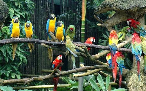 Liveshow của những chú chim sẽ bắt đầu khi tiếng nhạc rộn rã cất lên.