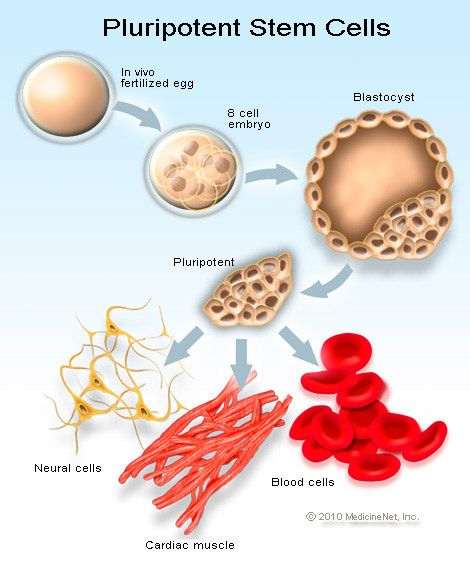 Why Stem: Picture Of The Stem Cell Cycle