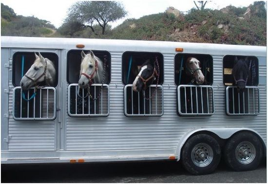 What is Horse Transportation?