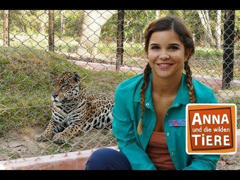 Die Raubkatzen Von Brasilien Doku Reportage Fur Kinder Anna
