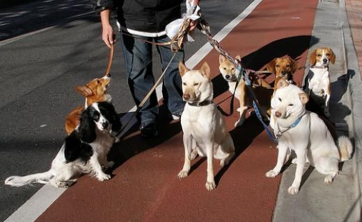 Are you in need of expert dog walking advice?