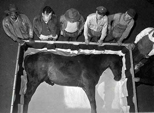 A Picture Of Man O War First Horse Embalmed In His