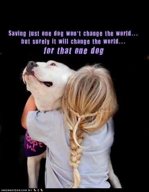 Saving just one dog won't change the world, but surely it will change the world for that one dog.