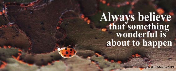 image of a ladybug with always believe quote
