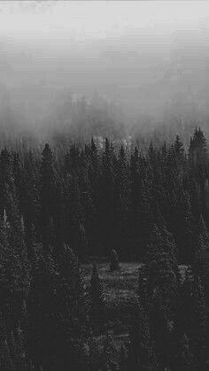 floresta dark