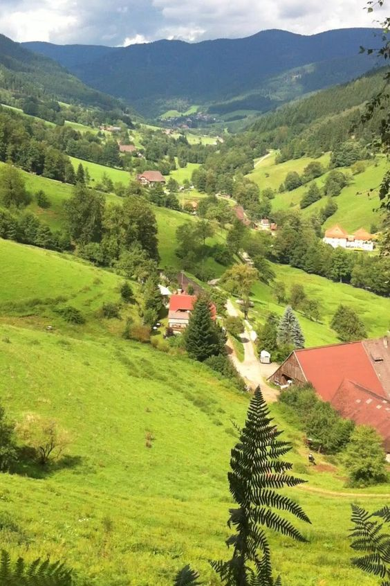 Valley in the Black Forest.  GERMANY