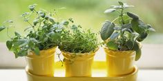 7 Reasons Why Your Herbs Keep Dying: Indoor Herb Garden Mistakes - How to Take Care of Indoor Herbs