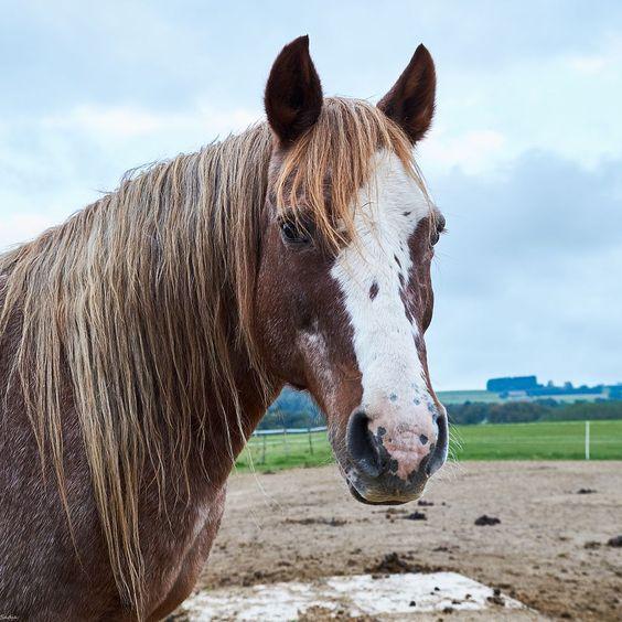 Nice gelding by Sadja on 500px
