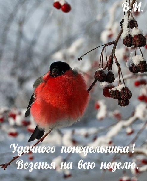 Fotografii Samye Krasivye Otkrytki I Animacii Zabavnye Kartinki