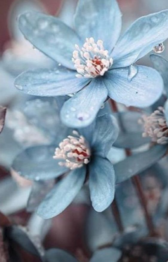 Excellent Free Of Charge Sky Blue Flowers Strategies Blue Colour Is Everlastingly Appointed Through The In 2021 Blue Flower Wallpaper Beautiful Flowers Trendy Flowers