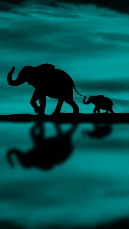32+ Cool elephant wallpapers High Resolution