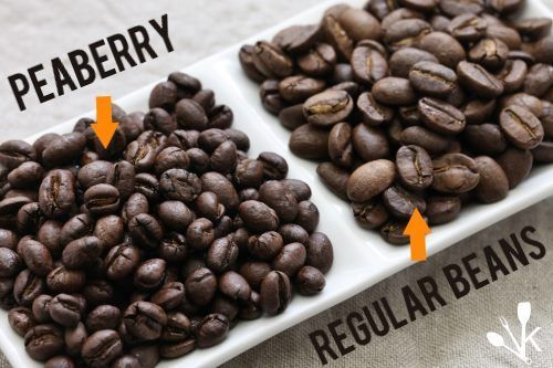 Best Peaberry Coffee Bean Guide Reviews Kitchensanity Peaberry Coffee Buy Coffee Beans Beans