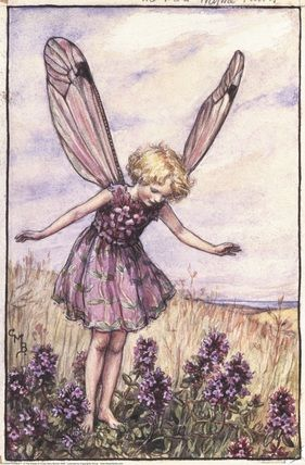 The Wild Thyme Fairy, painted by Cicely Mary Barker for the first edition of her book 'Flower Fairies of the Summer' (1925).  For production reasons, this illustration no longer appears in the book today.                                         Author / Illustrator          Cicely Mary Barker: