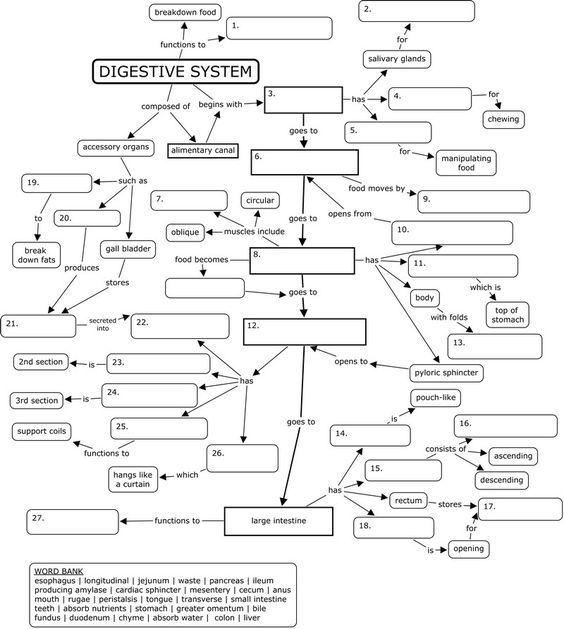 Concept Map Digestive System Digestive System Worksheet Human